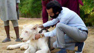 Big Cats of Instagram: Pakistani Elite's Love of Exotic Wildlife