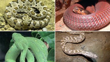 World Snake Day 2019: Exotic Serpents You Can't Unsee, View Pics