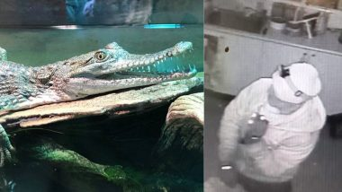 Snakes and Freshwater Crocodiles Sneaked out of Australia's Canberra Reptile Zoo, Officials Release Footage to Nail Thief (Watch Video)