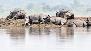 Kaziranga National Park Flood: Battle to Rescue Wildlife Underway as Death Toll of Animal Rises to 215 in Assam