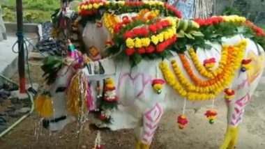 Bail Pola 2019 Date, Wishes & Images: Significance and Celebrations Associated With Bull-Respecting Festival Observed on Shravan Amavasya