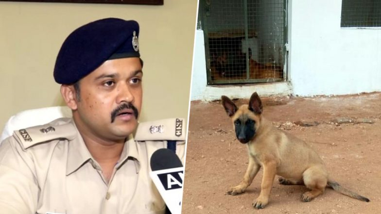 Belgian Malinois Dog 'Khoj' Joins The CISF Security Fold, Breed Also Part of US Navy Seal Costs Rs 1.5 Lakh For Each Dog