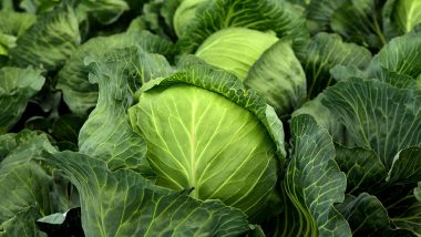 How to Use Cabbage (Patta Gobi) to Lose Weight (Watch Video)