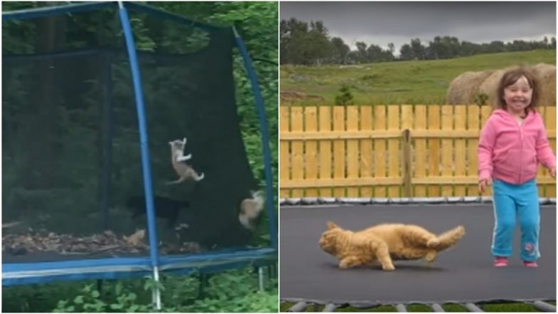 Cats Bouncing on Trampolines Will Give You the Purrrfect #FridayFeelings (Watch Cute Videos)