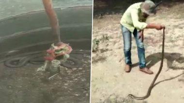 Venomous 6-Foot-Long Cobra Caught in Tamil Nadu's Septic Tank, View Pics!