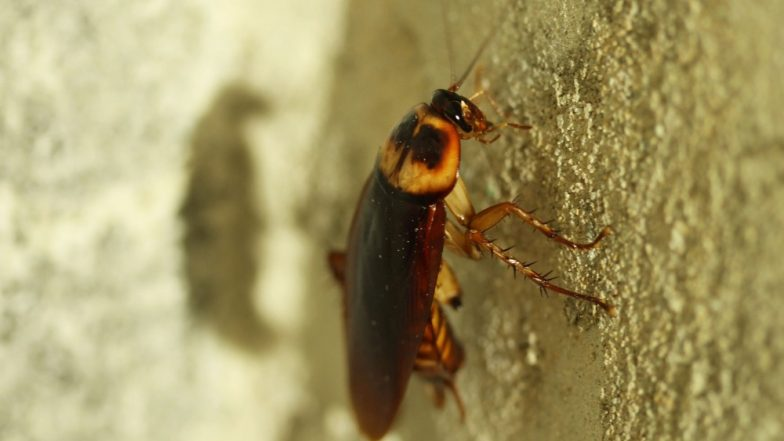 Cockroaches Become Immune to Pesticides! Roach Haters Worst Nightmare Comes True as Bugs Develop Resistance to Chemicals