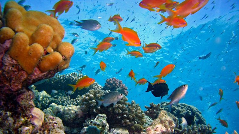 Coral Cover of Australia's Great Barrier Reef Depleting at an Alarming Rate, Tourism to Get Affected