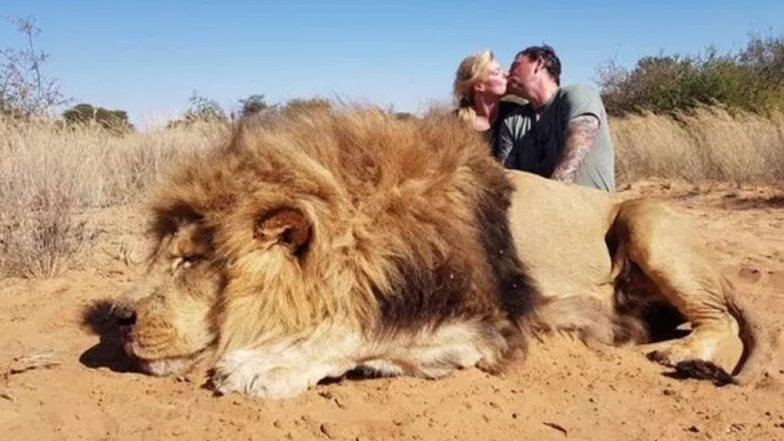 Couple Kiss With a Massive Dead Lion They Killed to Show Off Their Trophy Hunting Skills in South Africa, View Shocking Pic!