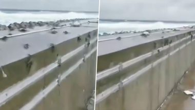 Flying Crabs Spotted in South China's Yongxing Island as Citizens Prepare for Typhoon Wipha; Watch Video