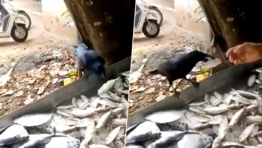 Watch How This Smart Crow Bargains for a Bigger Fish With the Fishmonger in This Viral Video