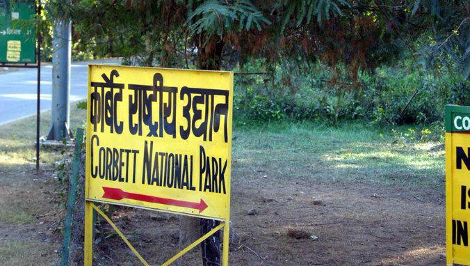 Tiger Kills Man in Kalagarh Area of Corbett Tiger Reserve in Uttarakhand