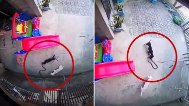 Dogs Moxie and Miley Fight Snake to Save Baby in Kidapawan City in Philippines, Watch Heart-Touching Video