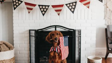 Fourth of July Dog Pics: Enjoy These Cute Canine Photos, But Make Sure Your Pets Are Comfy this American Independence Day 2019