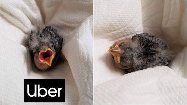 Drunk Utah Man Books Uber Ride so Injured Baby Bird Could Reach Wildlife Rescue on Time
