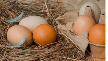 Brown Eggs vs White Eggs: Which is Healthier? Know All About Egg Nutrition