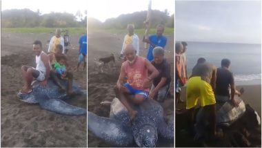 Indonesian Locals Ride Leatherback Turtle Harrassing the Endangered Amphibian as It Tries to Flee (Watch Disturbing Video)