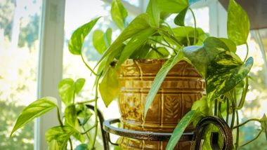 Breathe Clean: 6 Best Indoor Plants to Purify the Air in Your Home