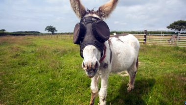 Jonty the Donkey Kicks Back in Style With Snazzy UV Goggles That's Helping Him Recover From Blindness