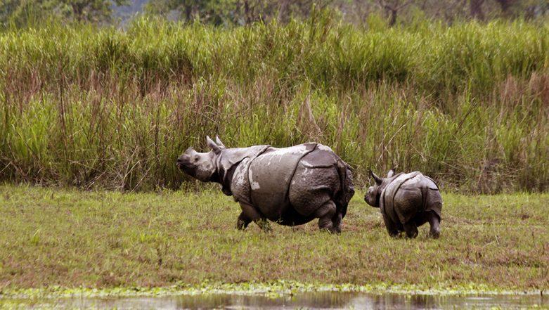Assam Floods: Heavy Rainfall Wreaks Havoc, 70% of Kaziranga National Park Submerged, Animals Taken to Highlands