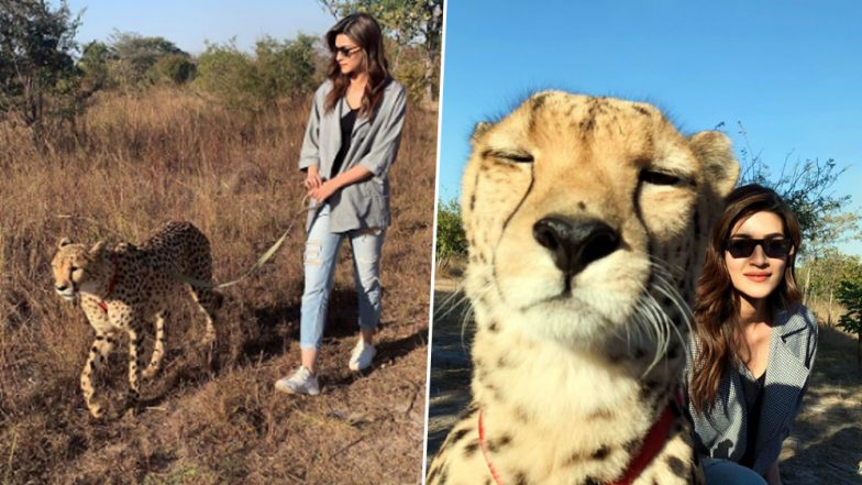 Kriti Sanon Shares Picture with a Cheetah from Her Zambia Holiday, Netizens Ask Actress to 'Be Responsible and Sensitive'