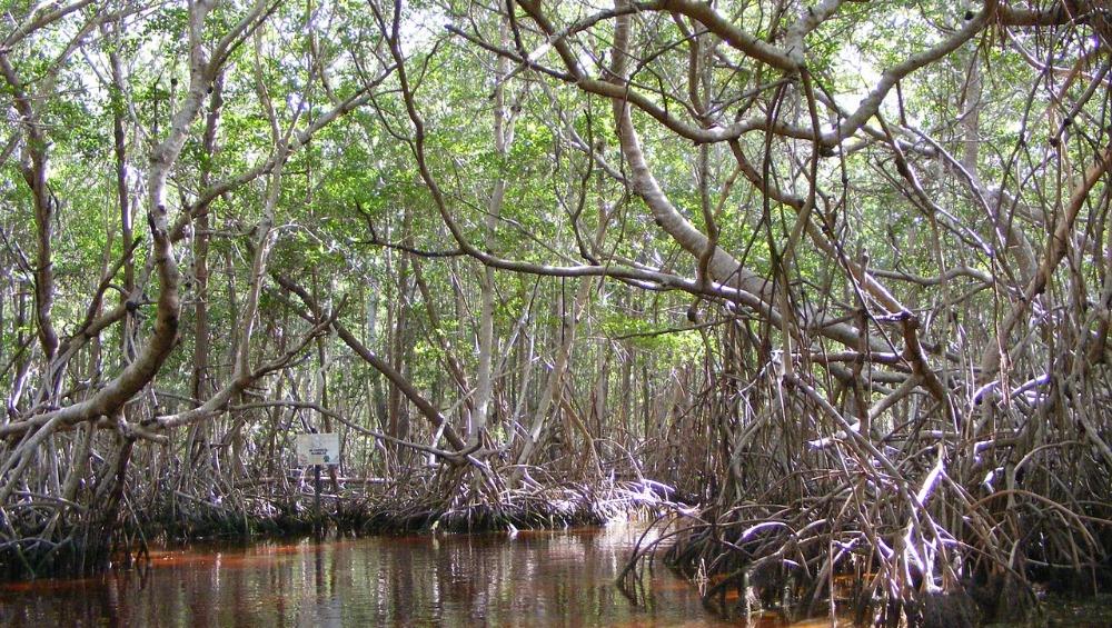 Mangroves-Day