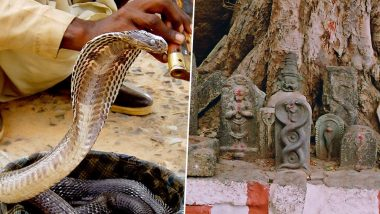 Nag Panchami 2019 Date: Significance, Rituals, Traditions Related to the Day to Worship Snakes