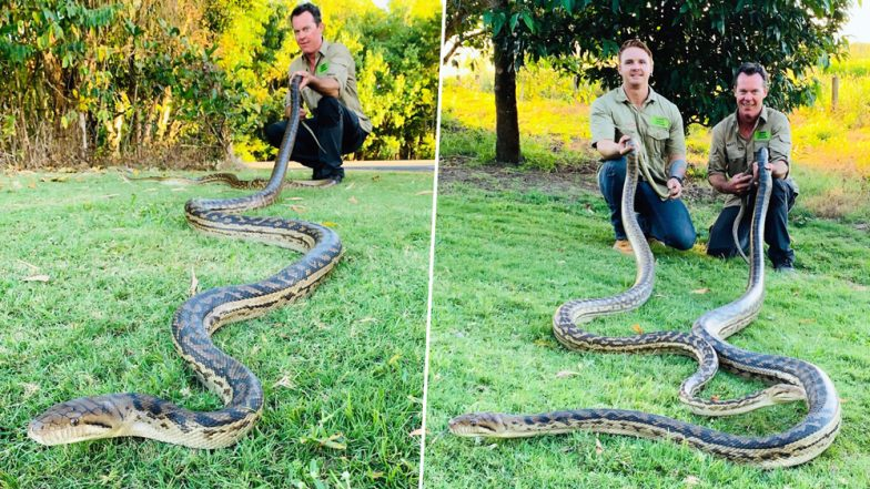 Pythons Mating on Rooftop in Cairns Crash Through Ceiling Due to Their Weight (View Pics)