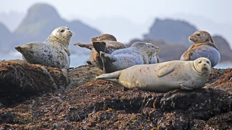 Seals, Terrified of Tourists Jump Off Cliffs in Scotland Injuring Themselves During the Fall
