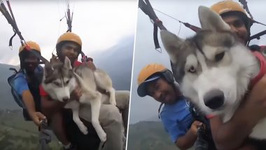 Siberian Husky Goes Paragliding 3,500 Feet Above Ground With Its Human in Manali! (Watch Video)