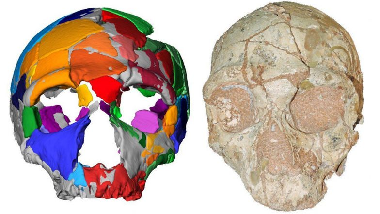 Oldest Human Remain Found Outside Africa In Form Of 210,000-Year-Old Skull