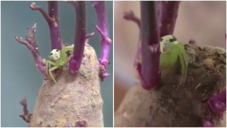 Spider With Human-Like Face Found Inside House in China, Video of the Crawling Arachnid Baffles Netizens