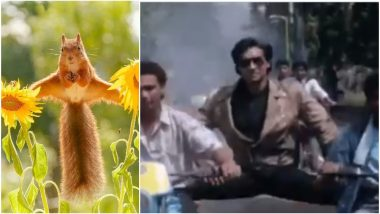 Squirrel Balancing on Two Sunflowers Reminds Netizens of Ajay Devgn's Bike Stunt From 1991 Movie Phool Aur Kaante; Check Out the Picture and Funny GIF