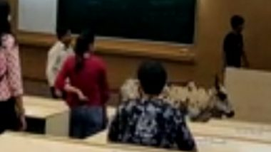 Mumbai: Stray Cattle Enters IIT Bombay Classroom As Shocked Lecturer and Students Looked On; Watch Video