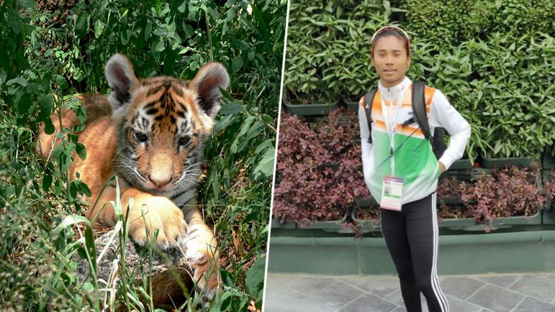 International Tiger Day 2019: Six-Month-Old Cub in Bengaluru's National Park Named After Hima Das