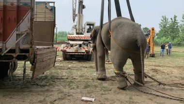 Two Bull Elephants 'Karan' and 'Arjun' Sharing Close Bonding Released in Pilibhit Tiger Reserve in Bareilly