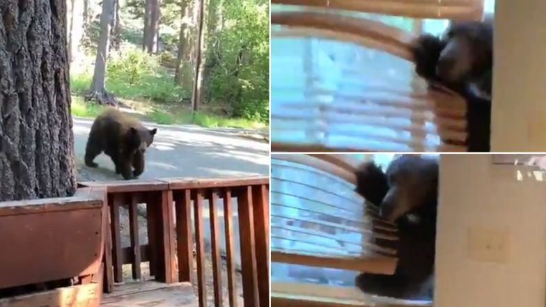 Bear Enters Woman's House Through Open Window in US, Terrifying Video Goes Viral