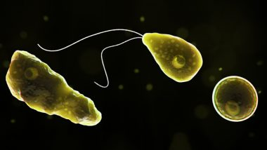 Brain-Eating Amoeba Kills US Swimmer: What Is Naegleria Fowleri? Know the Symptoms