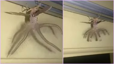 Alien-Like Creature Spotted Crawling Inside Indonesian Man's House, Netizens Baffled (Watch Viral Video)