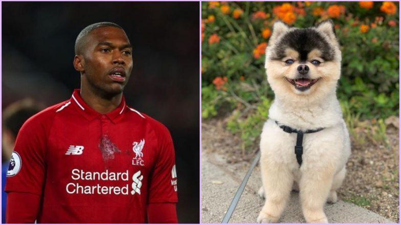Daniel Sturridge's Dog Is Kidnapped! Former Liverpool Striker Pleads Thief to Return His Beloved Pooch in a Viral Instagram Video