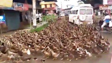 Viral: Traffic Comes to Halt in Kerala as Flock of Ducks Crosses Road, Watch Video