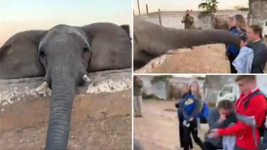 African Elephant Slaps Tourist for Trying to Click Its Picture, Watch Viral Video