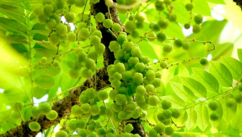 Home Remedy of the Week: How to Prevent Hair Fall in Monsoon with Amla (Indian Gooseberry)