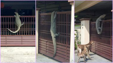 Giant 'Godzilla' Monitor Lizard Spotted Hanging On Malaysian Resident's Fence Is Scaring the Netizens, View Viral Pic