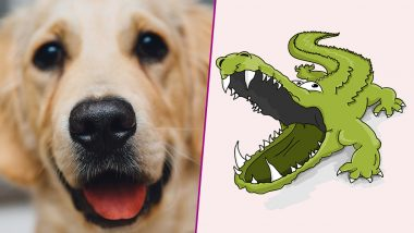 75-Year-Old Florida Man Fights With Alligator to Save His Pet Dog!