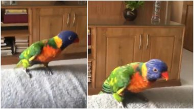 Parrot Dancing and Whistling on 'Aankh Marey' Is the Best Thing You Will See on the Internet Today (Watch Video)