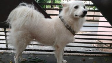 Pet Pomeranian Had 'Illicit Relationship' With Dog Next Door, Says Owner Who Abandoned Her