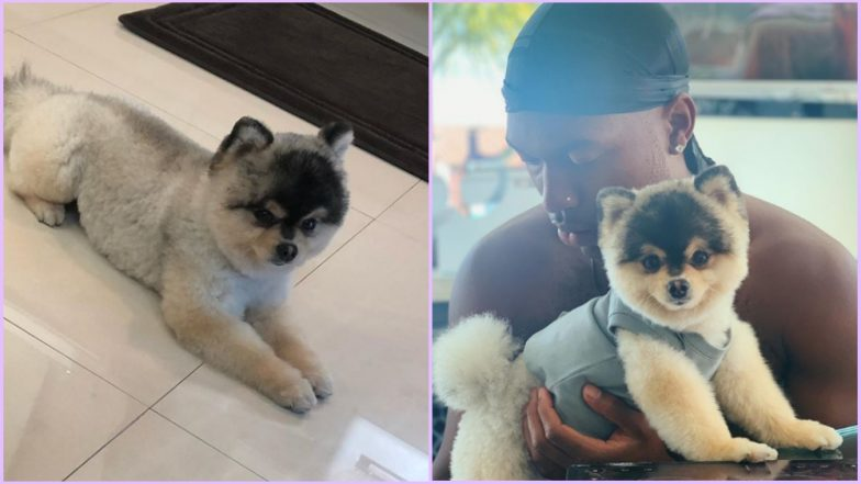 Daniel Sturridge Reunited With His Dog but $30000 Reward Was a Lie, Claims US Rapper Who Found Lucky Lucci