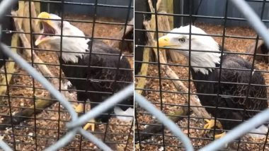 Sammy the One-Winged Bald Eagle Birdnapped From Long Island Wildlife Refuge, Authorities Offer $12K Reward for Stolen Bird