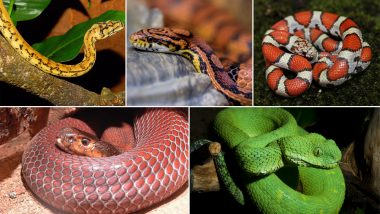 World Snake Day 2019: Five Exotic Serpents You Can't Unsee, View Pics