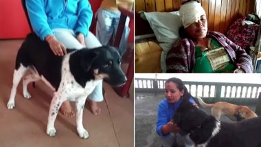 Pet Dog 'Tiger' Lives Up to His Name, Fights Off Leopard to Save Owner's Life in Darjeeling